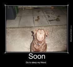 Smiling Dog Meme - new smiling dog meme soon smile dog by mrcactus meme center