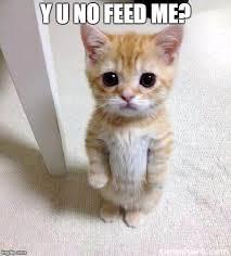 Feed Me Meme - cute cat meme imgflip