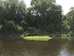 florida native aquatic plants sarasota county neighborhood grant program