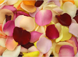 fresh petals fresh mixed colour petals flower delivery company
