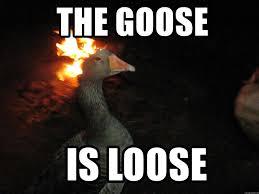 Goose Meme - the goose is loose fire goose meme generator