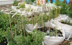 the vegetable garden in a bag telegraph