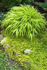 new utah gardener the most drought tolerant waterwise ornamental
