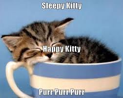 Sleepy Cat Meme - sleepy kitty happy kitty purr purr purr lolcats lol cat