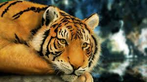 tiger images for kids wallpaper