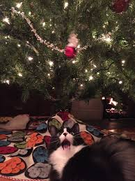 17 confessions from christmas tree loving cats