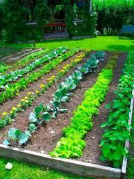 tone on a garden design plan copy modern garden