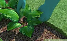 how to start a flower garden with pictures wikihow