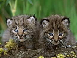 234 best baby animals 2 images on pinterest baby animals