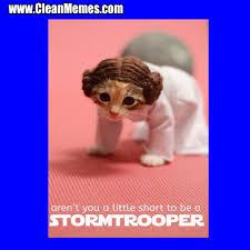 Star Wars Cat Meme - cat memes clean memes the best the most online page 15