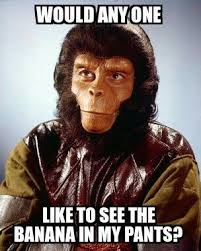 Planet Of The Apes Meme - 12 best my memes images on pinterest memes meme and funny stuff
