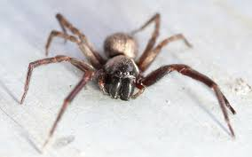way i understand the world wonders of the world spiders