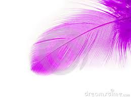 purple feather feather