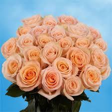 global roses vibrant peachy pink roses global