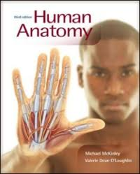 Human Anatomy And Physiology Marieb 7th Edition Textbook Rental Rent Human Anatomy And Physiology Textbooks From