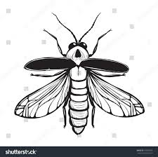 Firefly Insect Black Inky Drawing Bug Stock Vector 195295673