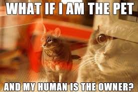 Mind Blown Meme - little kitty mind blown beheading boredom