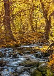 fall colors mono county mono county tourism film