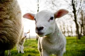 genesis 21 22 34 what is the meaning of these seven ewe lambs you