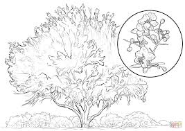 yellow palo verde coloring page free printable coloring pages