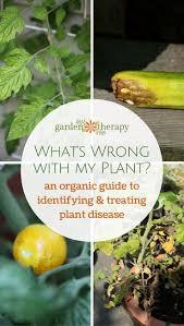 gardening tips 961 best growing and gardening images on pinterest garden ideas