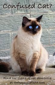 cat dementia u2013 signs treatments u0026 tips for living with a senile cat