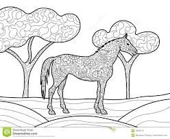 horse coloring book for adults vector stock vector image 70659170