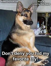 belgian malinois quotes 1283 best german shepherd and belgian malinois images on pinterest