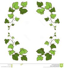 best 15 ivy vector hand drawn frame climbing ground creeping woody