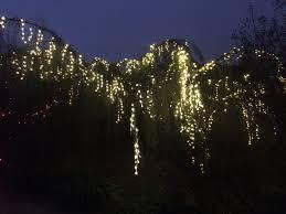 Botanical Gardens Christmas Lights by Memphis Botanic Garden Archives Volunteer Odyssey