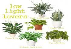 charming office plants low light low light loving houseplants