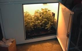 building a grow cabinet turn key grow boxes for dummies hightimes http www hightimes com