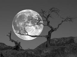 the moon and the tree 100 musical footsteps