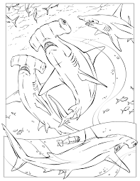 hammerhead shark coloring pages shark coloring marine life