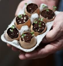 ground eggshells 17 apart how to plant seeds using eggshells