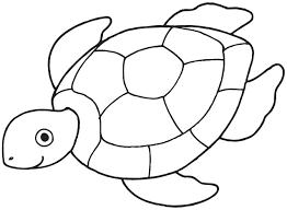 sea turtle coloring pages for preschooler coloringstar