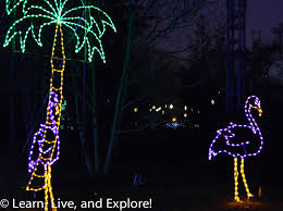 Stoneham Zoo Lights by 100 Zoo Lights Stone Zoo Evan And Lauren U0027s Cool Blog 7