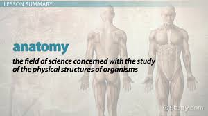 Why Is Anatomy And Physiology Important What Is Anatomy Definition U0026 History Video U0026 Lesson