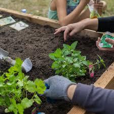 Urban Garden Los Angeles City Council Makes It Easier To Plant Urban Farms In La Curbed La