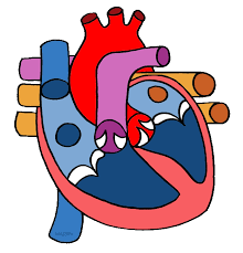heart clipart labeled for young kids