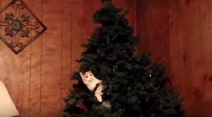 the funniest compilation of cats against trees