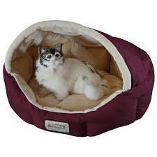 Cats In Dog Beds Cat And Dog Pets Beds Providers U2013 Hiltonfurnitures Com