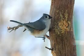 Iowa birds images Feeding birds through the winter season iowa public radio jpg