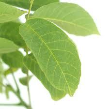 walnut tree gift the tree of wishes from tree2mydoor uk