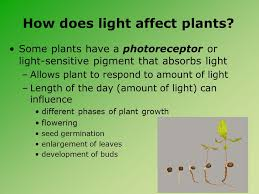 how does light affect plant growth understanding light temperature air and water effects on plant