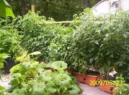 2009 star customers the garden patch growbox