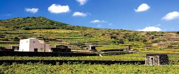 donnafugata winery on pantelleria