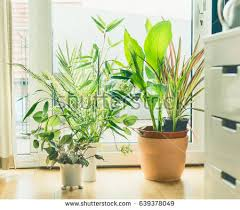 Urban Jungle Living And Styling by The Urban Jungle Stock Images Royalty Free Images U0026 Vectors
