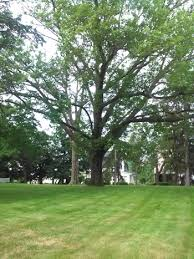 tree cabling and tree stabilization services let clark tree