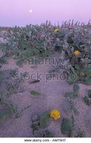 Flowers Salinas - salinas river stock photos u0026 salinas river stock images alamy